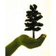 Hand mit Baum